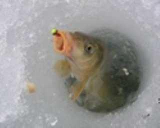 Зимняя ловля