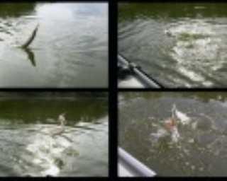Три оригинальных способа ловли хищной рыбы