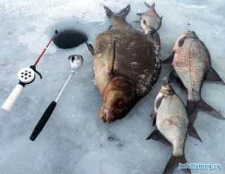 Ловим подлещиков зимой